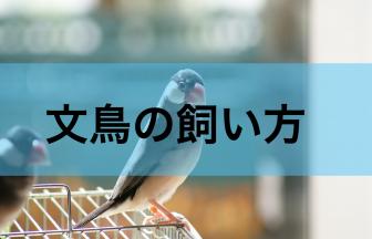 文鳥の飼い方