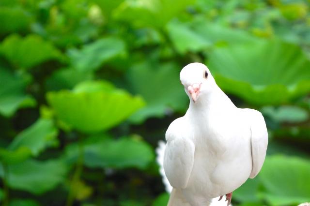 文鳥の飼育方法