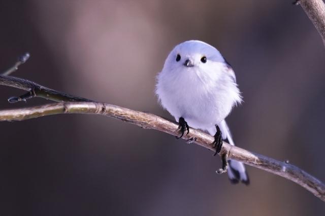 文鳥飼育のすすめ