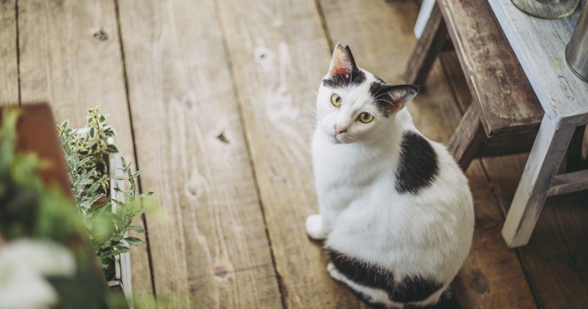 一人暮らしと猫