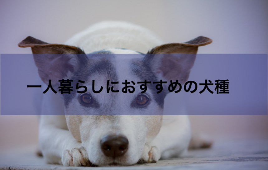 犬種アイキャッチ