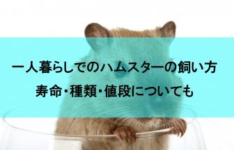 一人暮らしでもハムスターを飼いたい人必見の飼育方法【寿命・種類・値段】